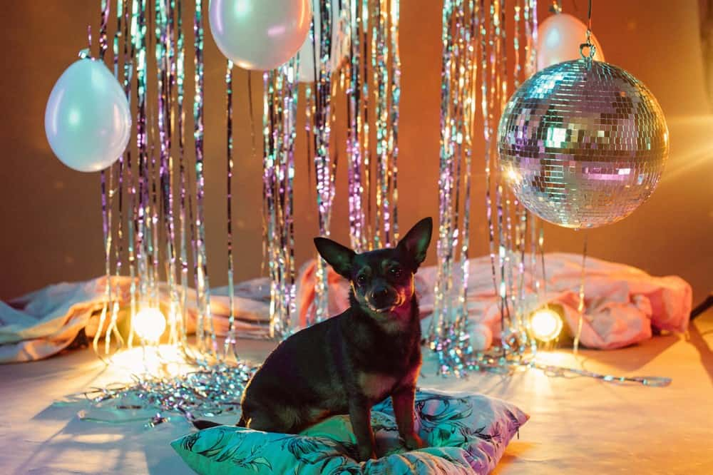 Even Dogs Love a Good Disco Party